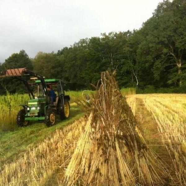 Hanfernte – Die Schönheit der Felder