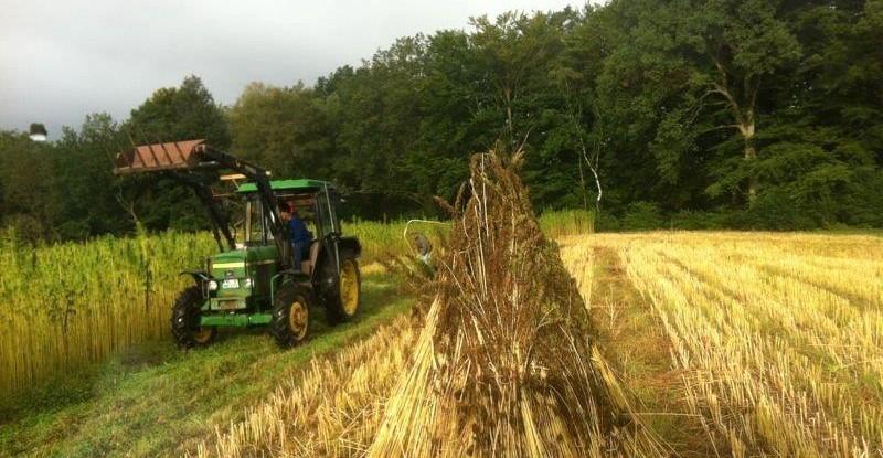 Hanfernte - Die Schönheit der Felder