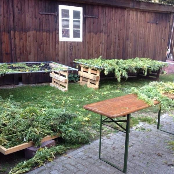 Hanfernte – Die Station der Sortierung