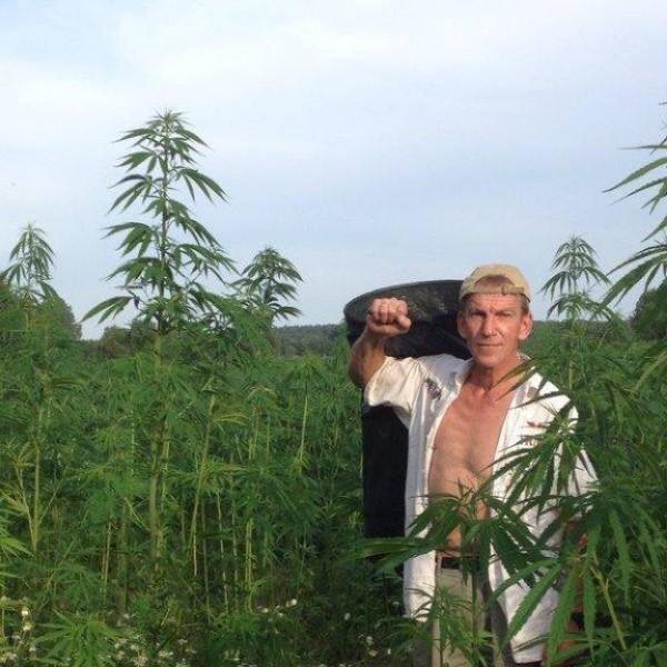 Hanfernte – In den Feldern