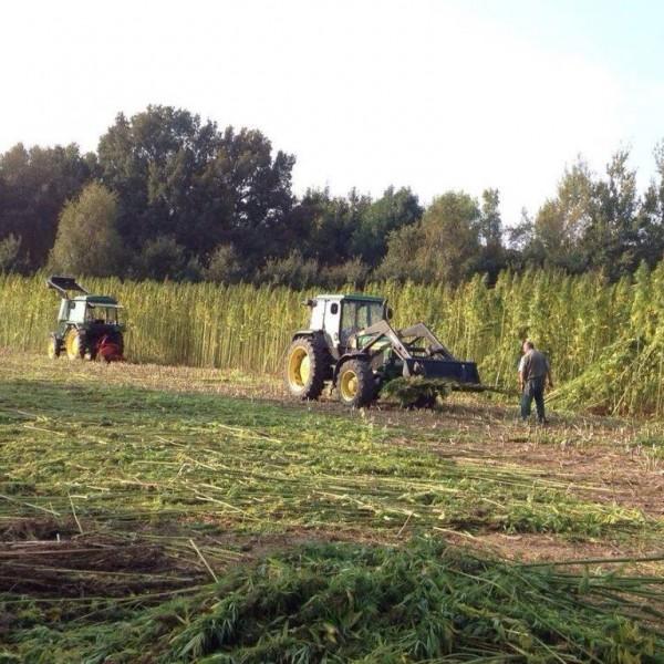 Hanfernte – Trecker bei der Ernte