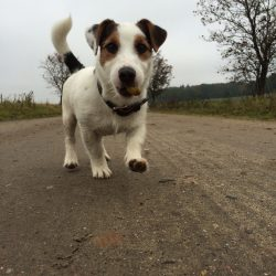 Hund der auf den Betrachter zuläuft