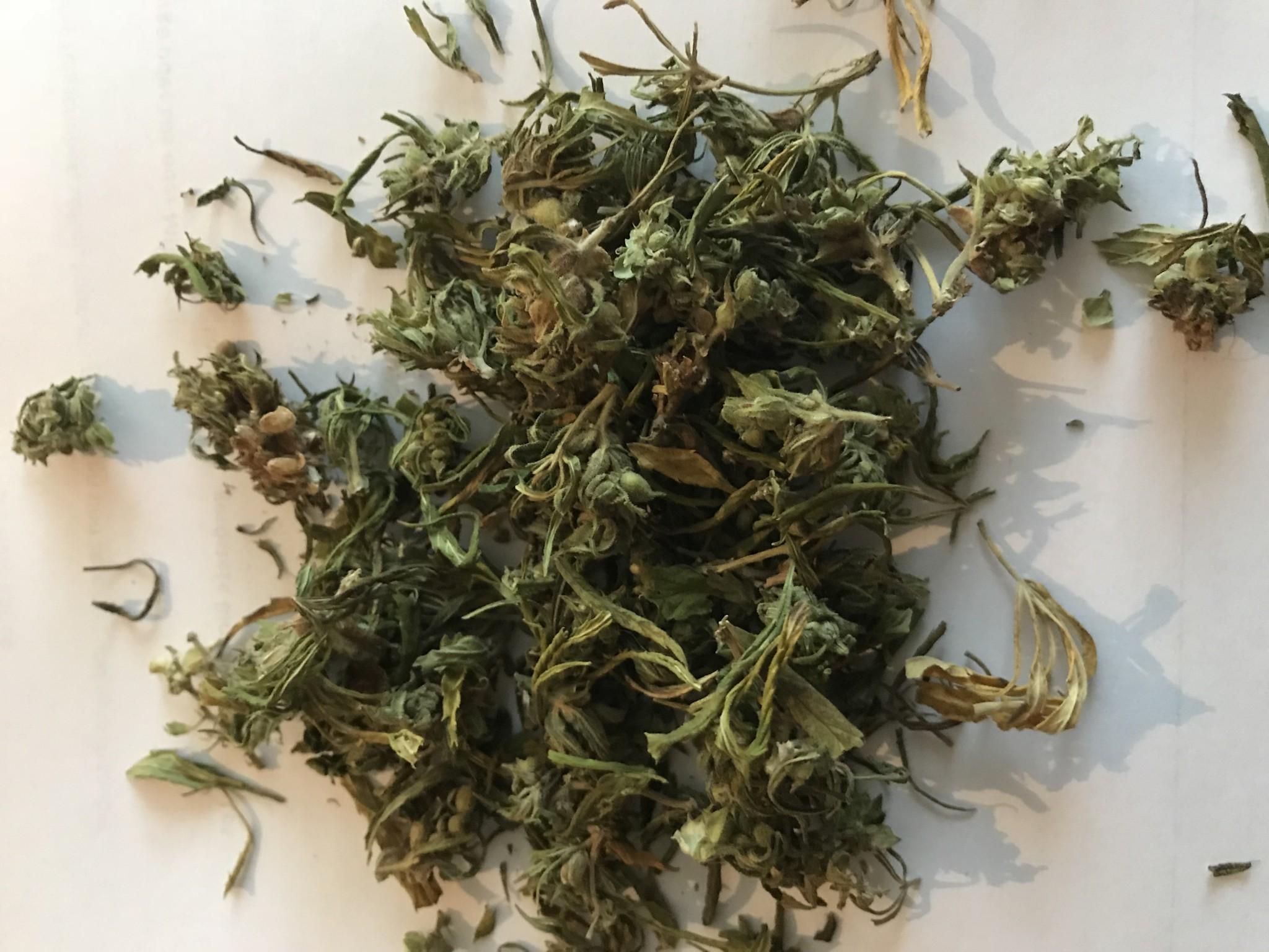 hanfblüten-Tee